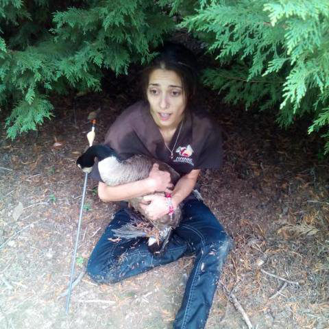 Marjan Arrow Goose Rescue